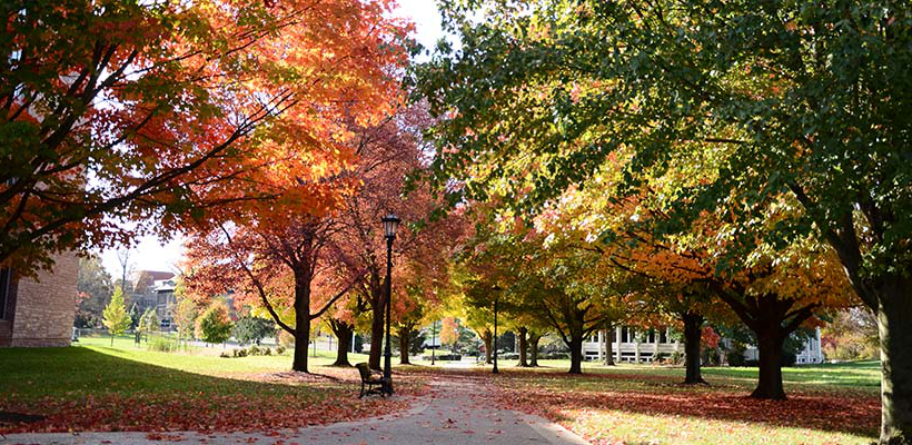 fall leaves on trees and on the pathway through campus